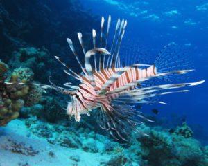 snorkeling-poisson-costa-rica