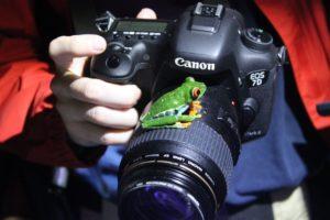 photo-grenouille-appareil-costa-rica-decouverte