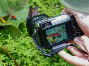 photo-grenouille-costa-rica-decouverte