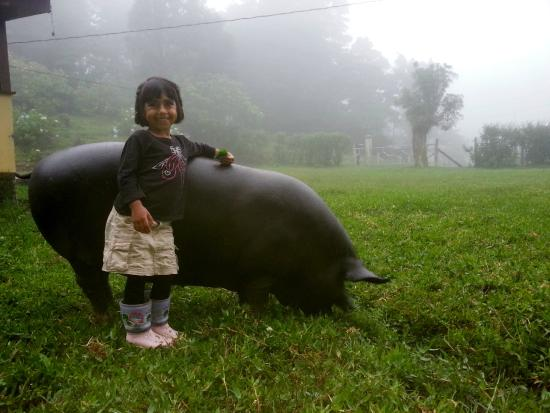 enfants-cochon-ferme-costa-rica-decouverte