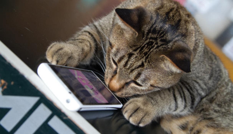 chat-smartphone-costa-rica-decouverte