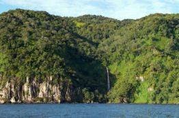 plante-endemique-isla-del-coco-costa-rica-decouverte