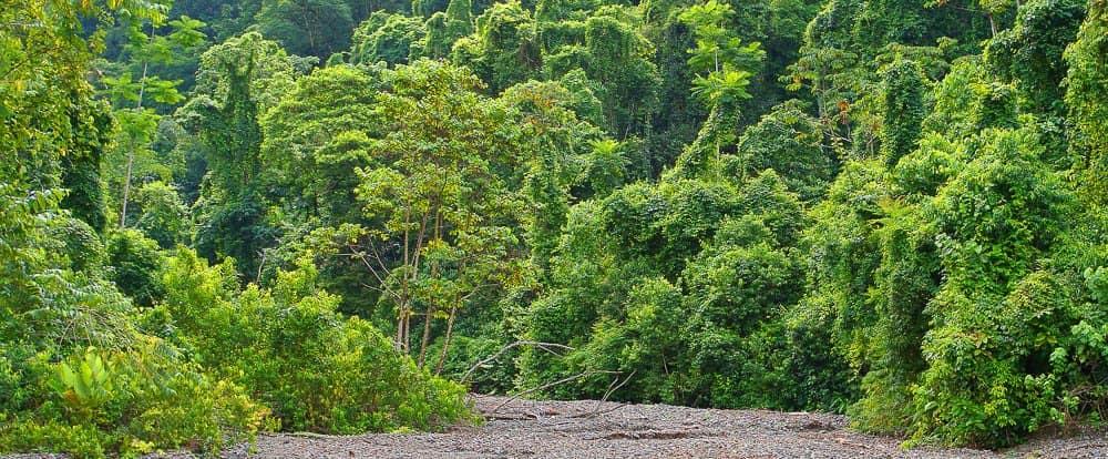 forets-tropicales-piedras-blancas-costa-rica-decouverte