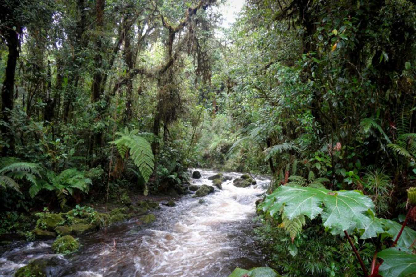 san-rafael-de-heredia-refugio-de-vida-silvestre-costa-rica-decouverte