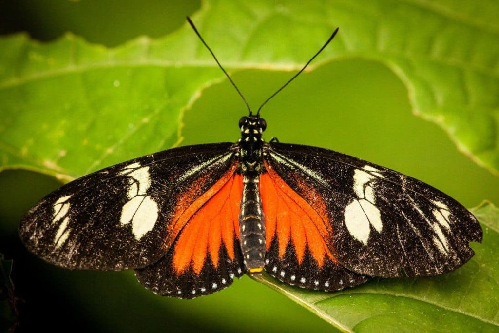 animaux-papillon-costa-rica-decouverte