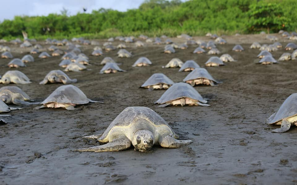 animaux-tortues-costa-rica-decouverte