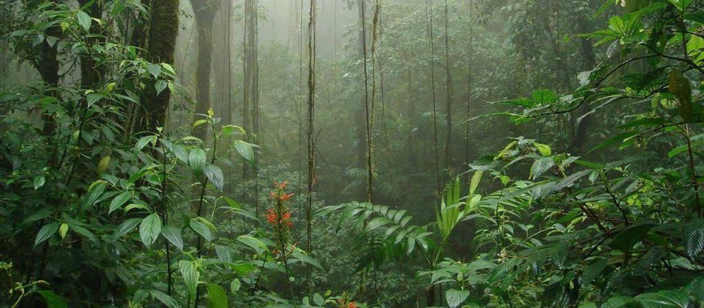 paix-reserve-biologique-monteverde-costa-rica-decouverte