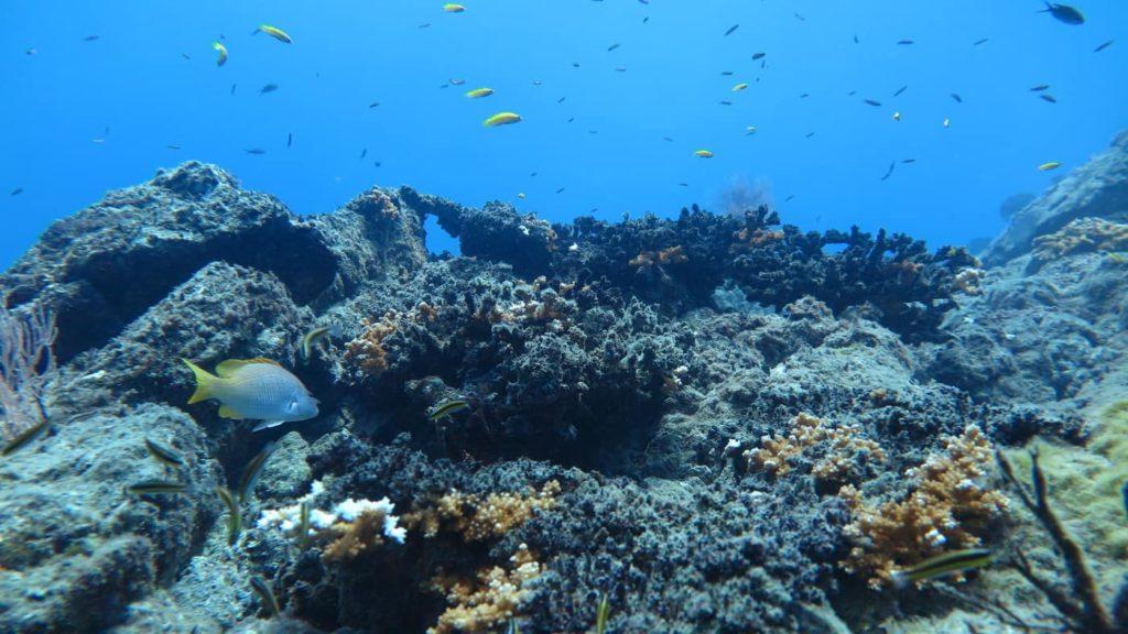 peninsule-dosa-isla-del-cano-costa-rica-decouverte