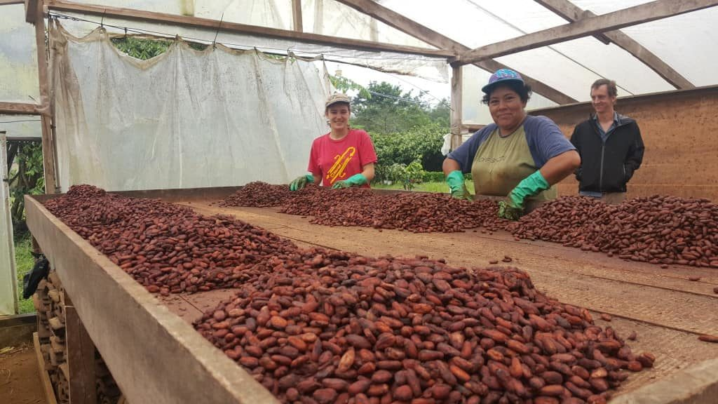 upala-cacao-costa-rica-decouverte