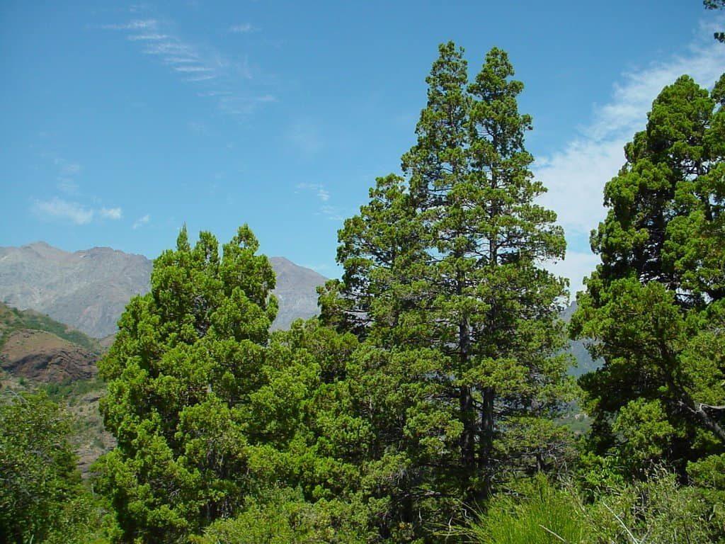 arbre-cipres-costa-rica-decouverte