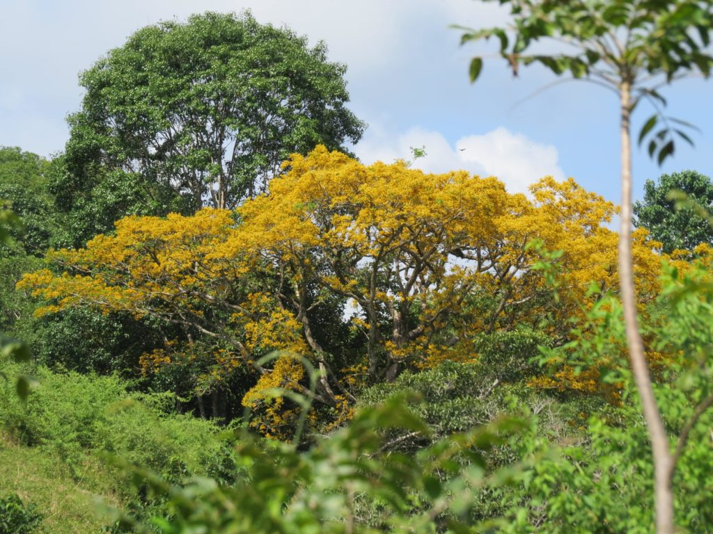 arbre-cristobal-costa-rica-decouverte