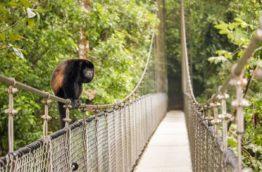 ponts-suspendus-mistico-singe-costa-rica-decouverte