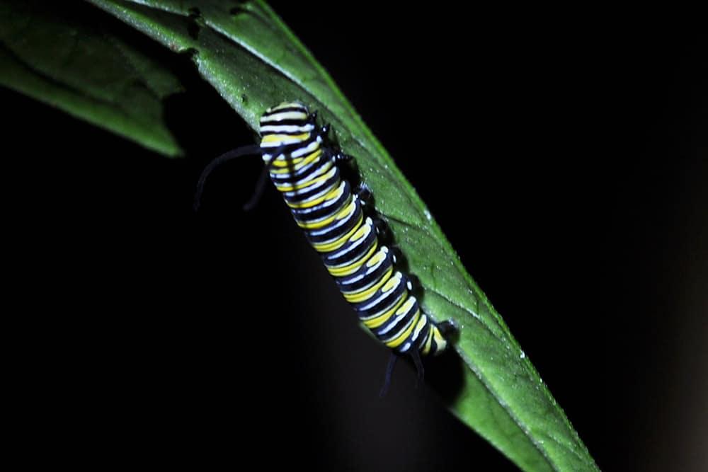 papillons-hacienda-guachipelin-costa-rica-decouverte