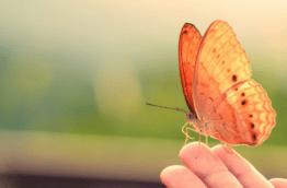 papillons-spirogyra-costa-rica-decouverte
