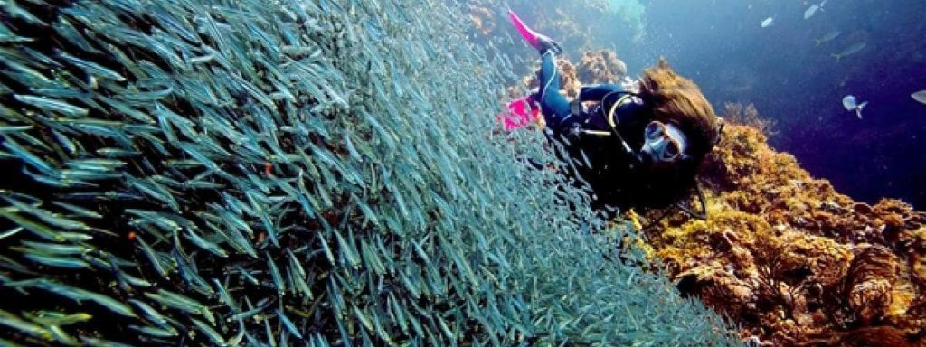 plongee-banc-poissons-costa-rica-decouverte