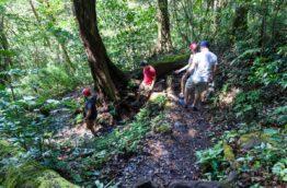 Les balades en forêt, les treck et les excursions pour les amateurs de nature au Costa Rica