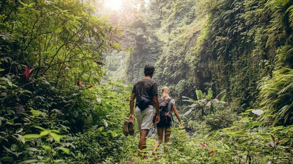 randonnee-jungle-costa-rica-decouverte