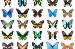 papillon-papillons-tropicaux-costa-rica-decouverte