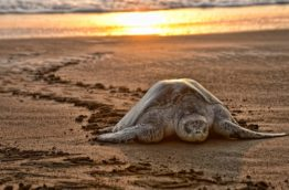 nidification-tortue-costa-rica-decouverte