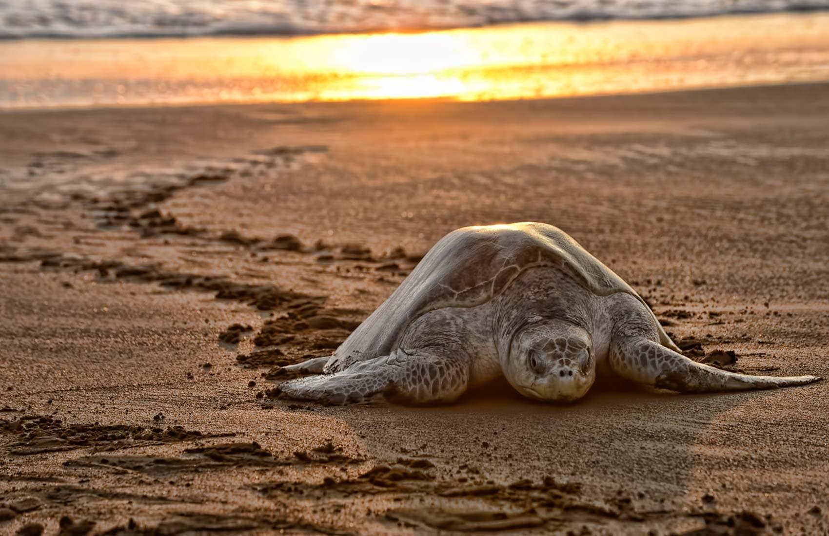 nidification-tortue-costa-rica-decouverte