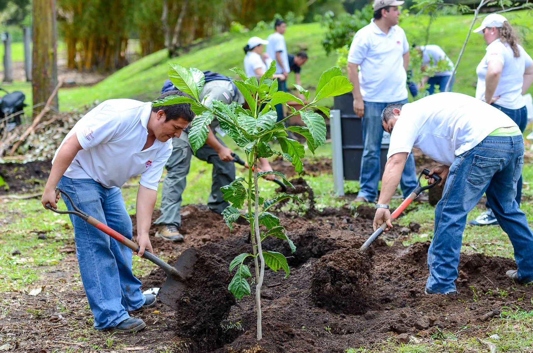 reforestation-plantation-costa-rica-decouverte