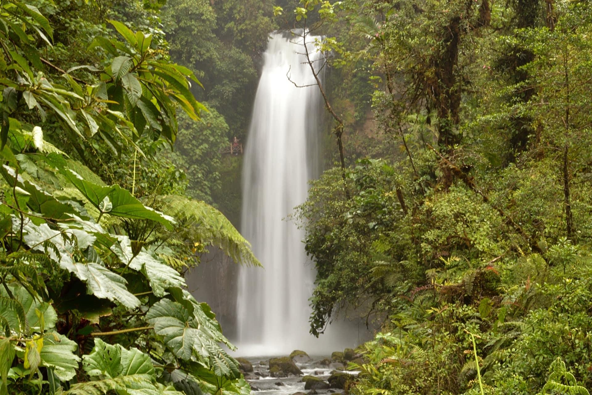 jungle-cascade-costa-rica-decouverte