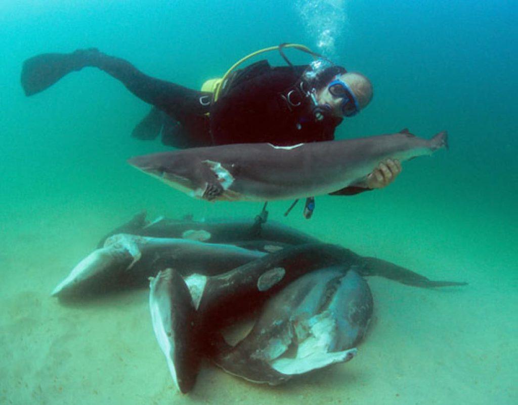 conservation-des-requins-ailerons-coupes-costa-rica-decouverte