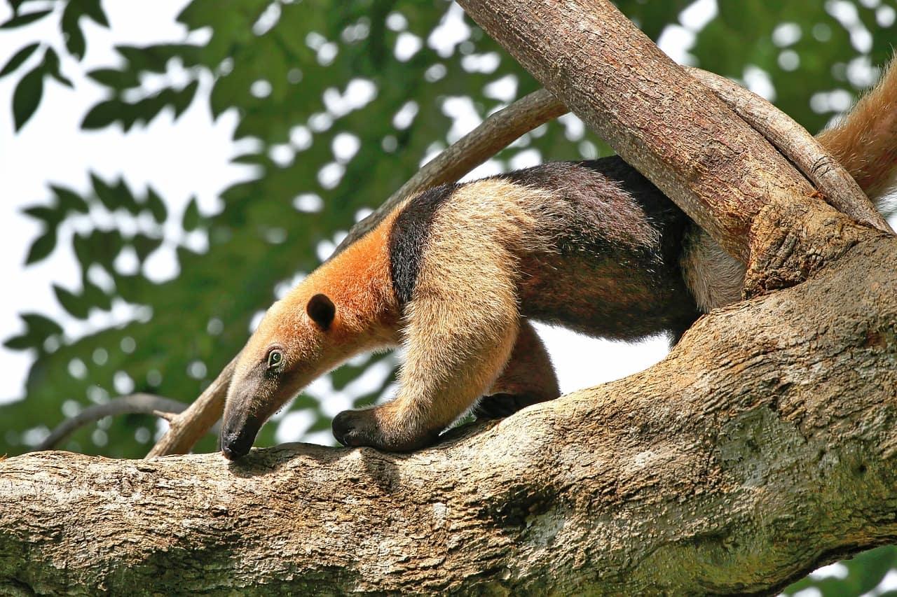 costa-rica-+-natura-biodiversite-costa-rica-decouverte