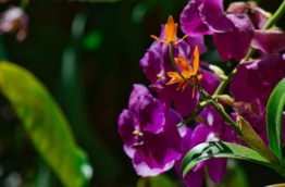 orchidees-cover-costa-rica-decouverte