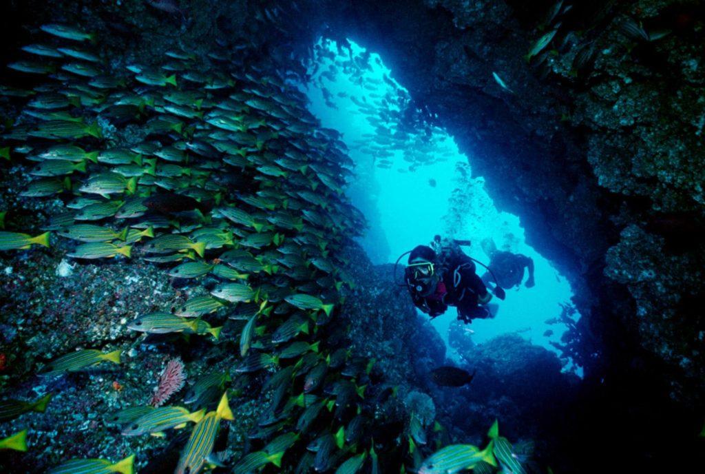 coraux-plongeurs-costa-rica-decouverte