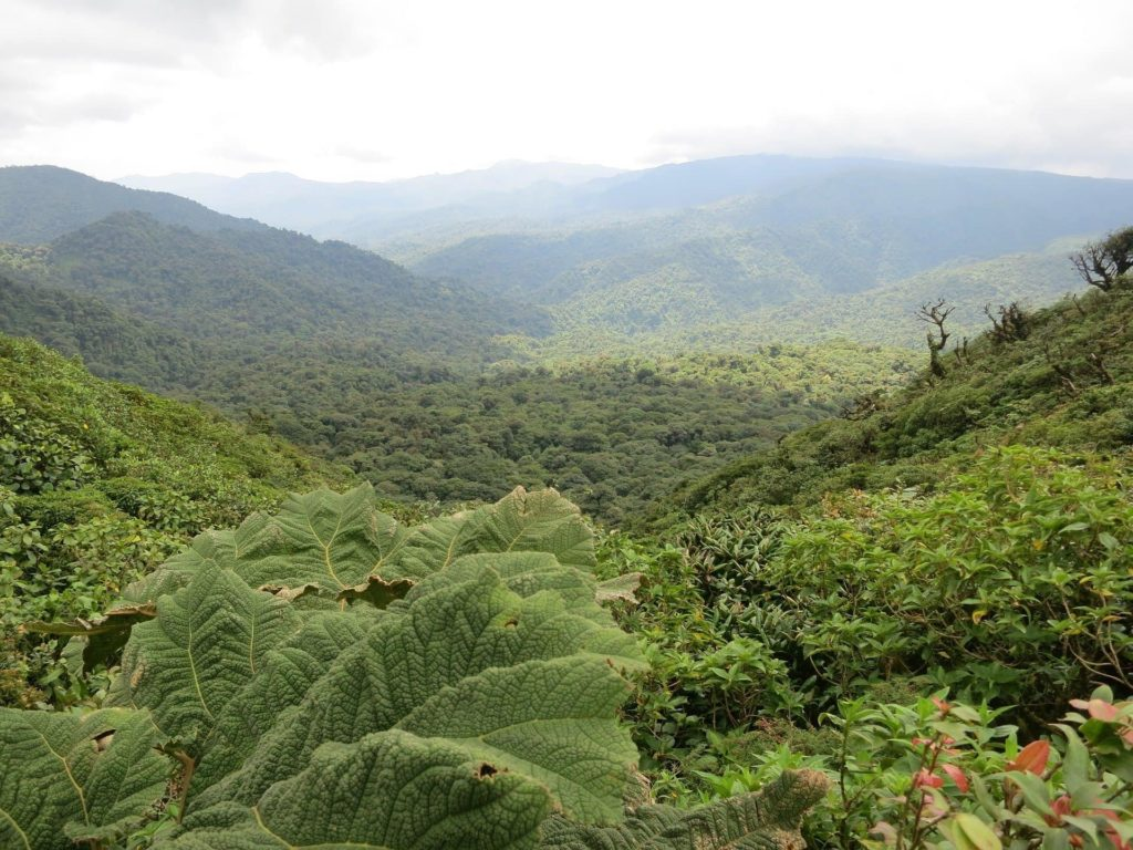 ecotourisme-monteverde-costa-rica-decouverte