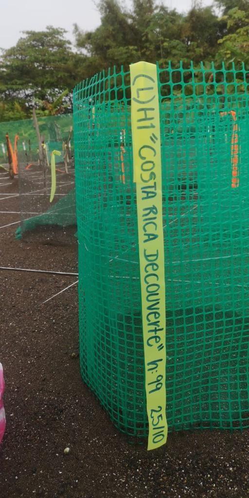 nid-de-tortue-costa-rica-decouverte