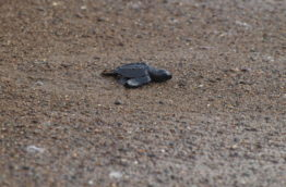 nid-de-tortue-plage-costa-rica-decouverte