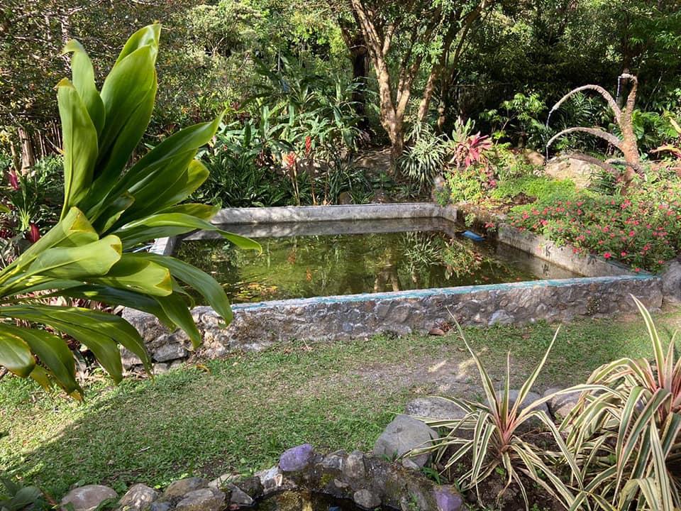 palmicha-bassin-costa-rica-decouverte