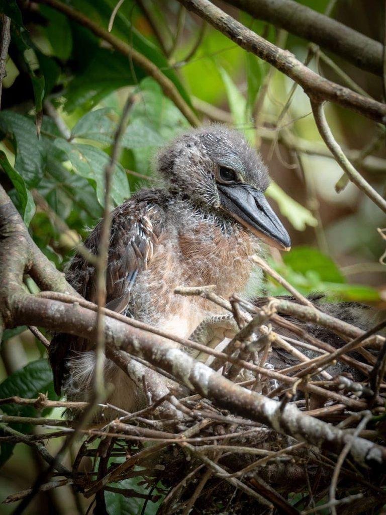 tortuguero-costa-rica-decouverte