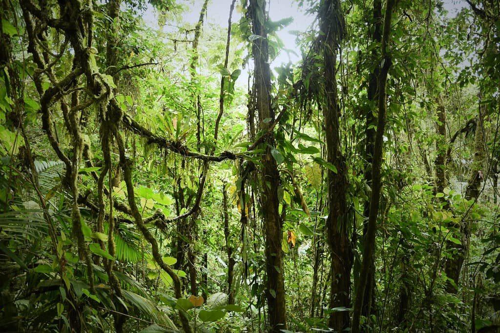 arenal-jungle-costa-rica-decouverte